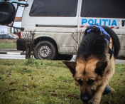 POLITIA, IN ALERTA: MINOR DIN BACANI DAT DISPARUT